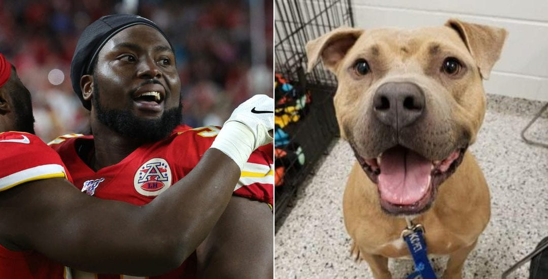 Chiefs Player Pays Shelter Fees for 109 Dogs